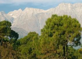 Fotoaktywny polimer z himalajskiej sosny