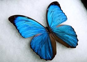 Efekt motyla – kolejne powłoki inspirowane naturą