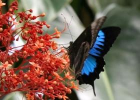 Skrzydła motyli – kolorowy cud natury