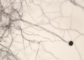 Zmodyfikowany bentonit skuteczny w walce z grzybami