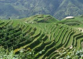 Naturalne surowce do farb – zielona rewolucja w Chinach