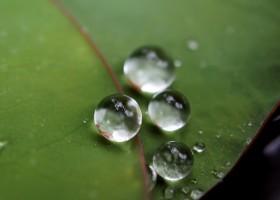 Superhydrofobowe powłoki o topografii liścia lotosu
