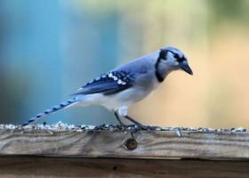 Walka o ptasi sekret – kolor strukturalny