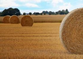 Nanosrebro szkodzi rolnictwu?