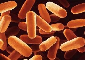 Powłoka, która trzyma bakterie z dala od żywności