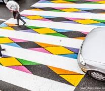 Kolorowa zebra