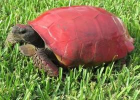 Żółw ofiarą okrutnego żartu