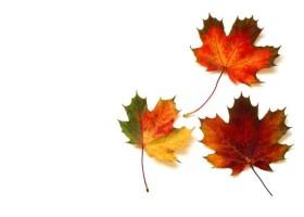 Wyjaśniamy tajemnicę jesiennych liści!
