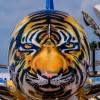Dzika fauna na samolotach z farbami AkzoNobel