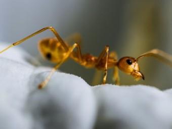 Farba kontra… mrówki?