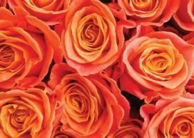 Rose Fusion – łososiowy Kolor Lutego Dunn-Edwards