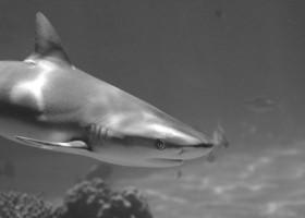 Skóra rekina inspiracją dla wytwórców farb