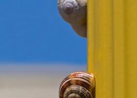 Farba elewacyjna kontra ślimaki