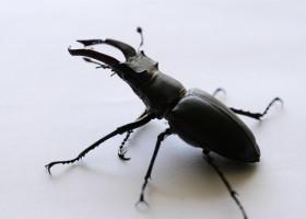 NASA walczy z robakami na samolotach