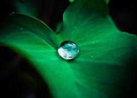 Superhydrofobowość i dobra adhezja mogą iść w parze?