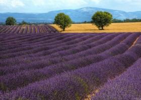 Styl prowansalski – pomysł na letnią metamorfozę