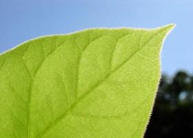 Open-Bio – bio-produkty pod kontrolą
