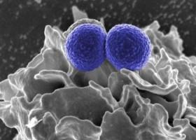 Spray na superbakterie