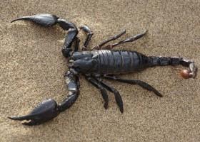 Odporna na erozję powłoka à la pancerz skorpiona
