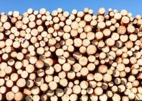 Drewno budowlane – jeszcze bardziej ekologiczne