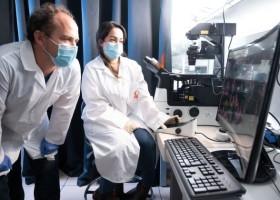 Nowa powłoka zwalcza wirusy jonami metali