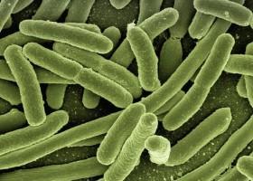 Boom na powłoki antymikrobowe – raport Polaris