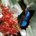 skrzydla motyli