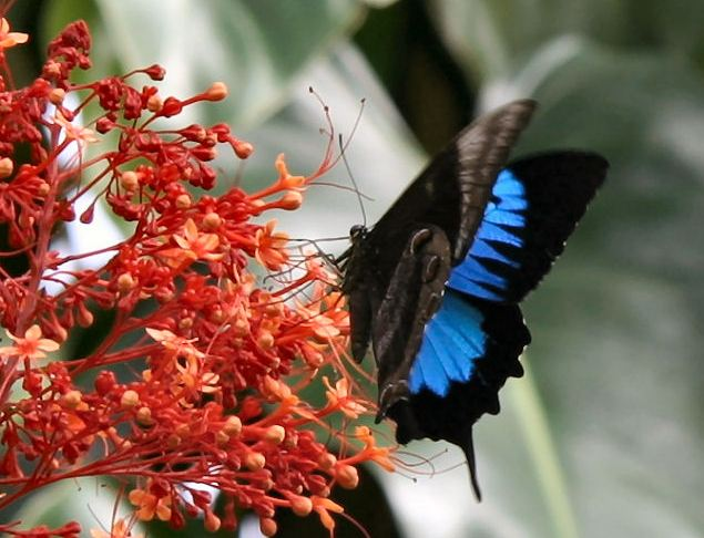 skrzydła motyli