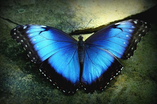 biomimetyka