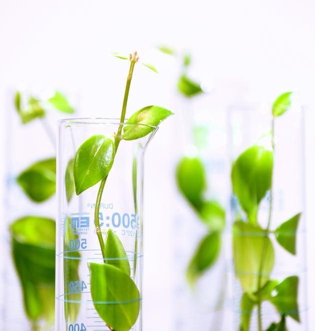 chemikalia pochodzenia naturalnego