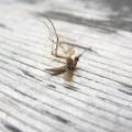 farba proszkowa komary