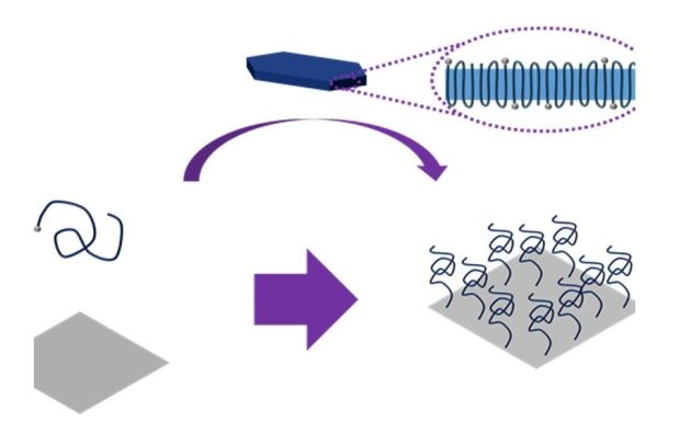 polimerowe nanoszczotki