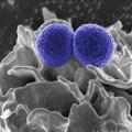 spray superbakterie