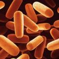 powłoka żywność bakterie