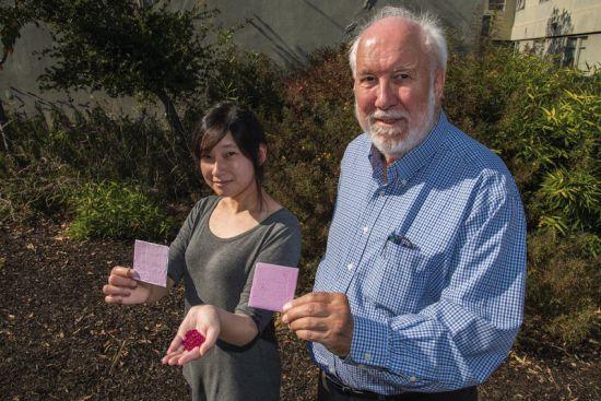 Sharon Chen i Paul Berdahl prezentują opracowaną przez nich powłokę oraz syntetyczne kryształy rubinu użyte w pierwszym etapie badań. Fot. Marilyn Chung / Berkeley Lab