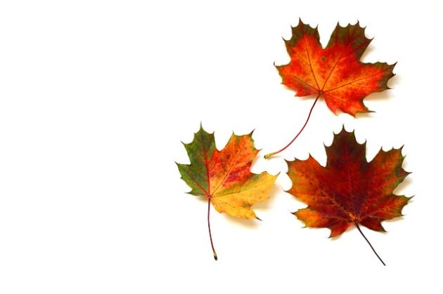 jesienne liście kolory