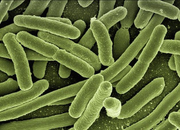 biocydy
