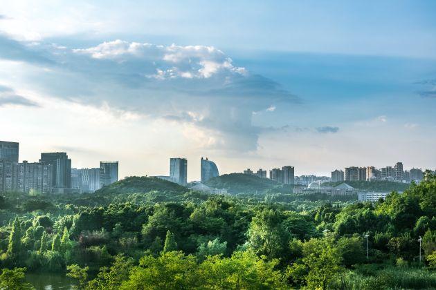 zielone miasta Urban Nature Alliance