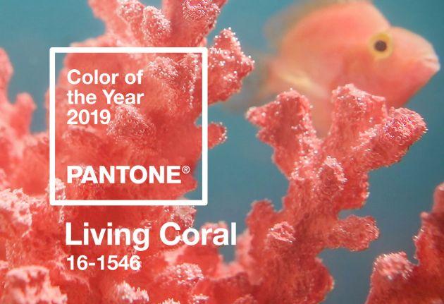 BASF Kolor Roku 2019 Pantone